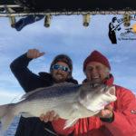 pêche au calamar le denti