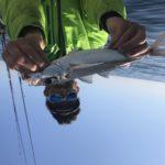 comment pêcher des vifs 83