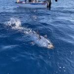 Pêche Carqueiranne 83
