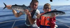pêche sur chasse pélamides